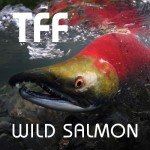 Totem Flyfishers are working to preserve wild salmon